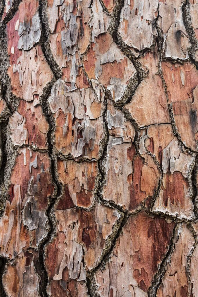 Bushland Textures
