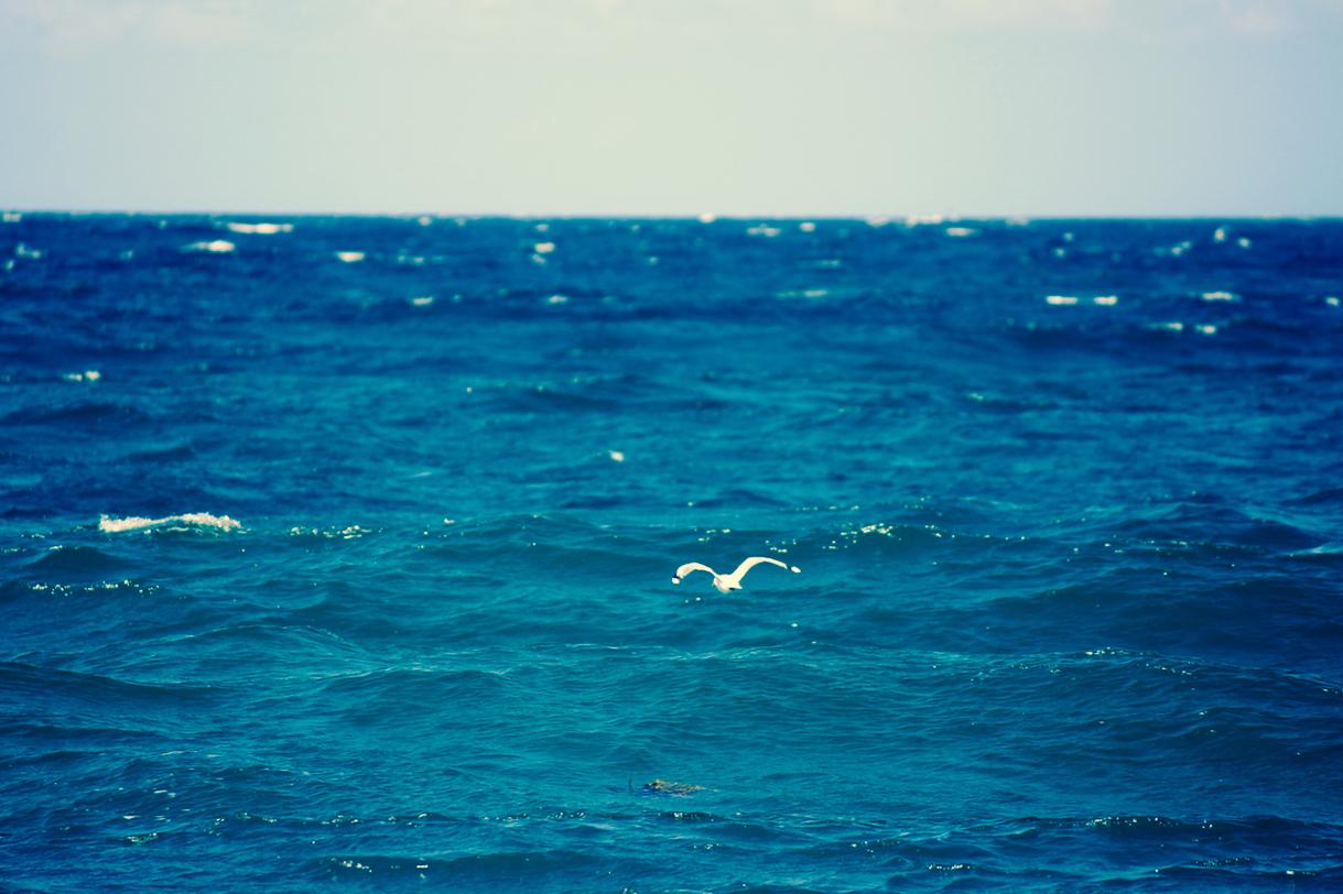 Illawarra Beaches