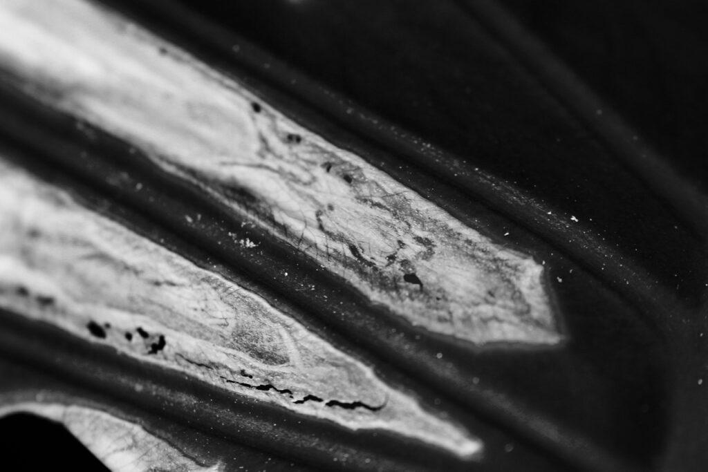 Plant Textures
