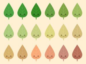 Cute Kawaii Leaves