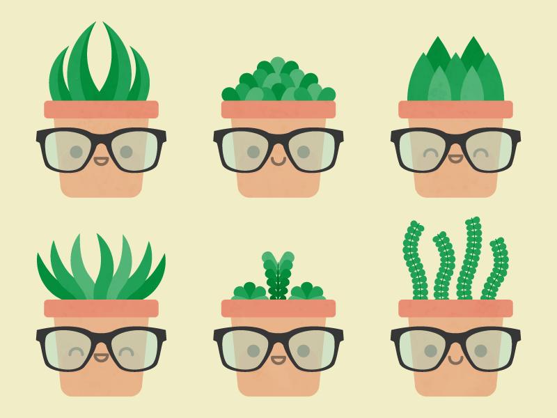 Cute Kawaii Succulents
