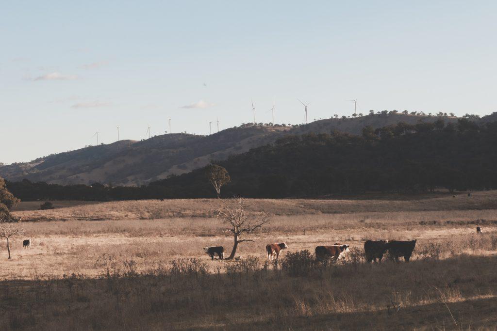 A Current of Change: Crudine Ridge Wind Farm